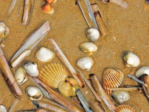 Razor Shells